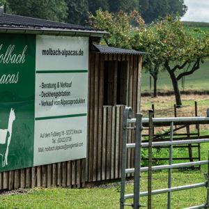 Molbach Alpacas Ambiente 03